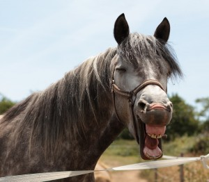 laughing horse-head