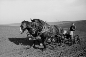 work-horses